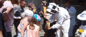 atelier-de-decouverte-des-abeilles2